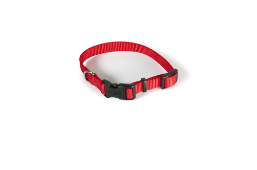 Red nylon collar