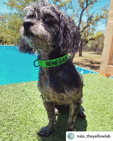 "Small Dog - 3/4"" Quick Release Buckle Collar"