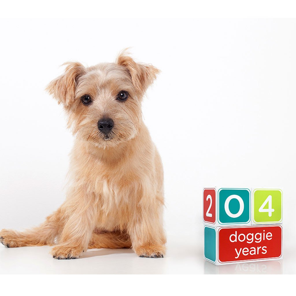 Puppy Age Blocks for Photos