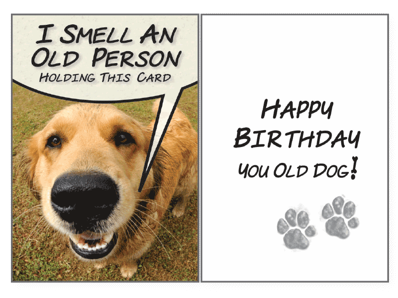 I Smell An Old Birthday Card Rocky Maggies Pet Boutique And Salon