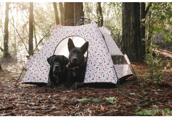 Scout & About Outdoor Tent