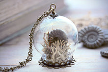 Ammonite Necklace Fossil Pendant Terrarium