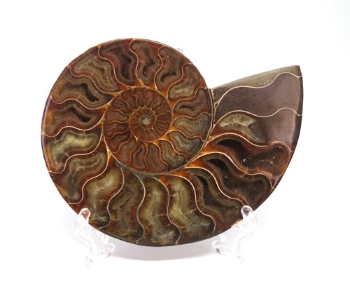 Ammonite Fossil large - Moonstone Felt And Crystals