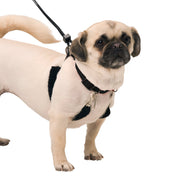 Sporn Halter No-Pull dog harness