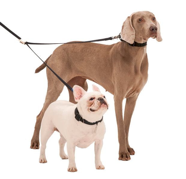 Sporn Double Dog Leash - Walk 2 dogs at the same time