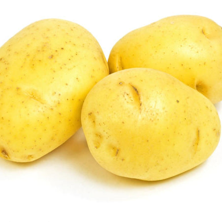 Potato 'Yukon Gold' NB grown