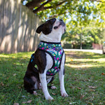 Harness - Tropical Toucans (Standard Dog Harness)
