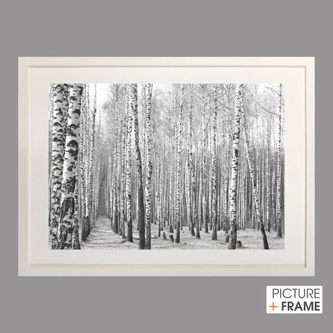 Monochrome Trees - Picture Framer Perth