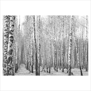 Black and White Trees - Photographic Poster print - Perth Picture Framers