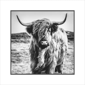 Highland Cow - Picture Framer Perth