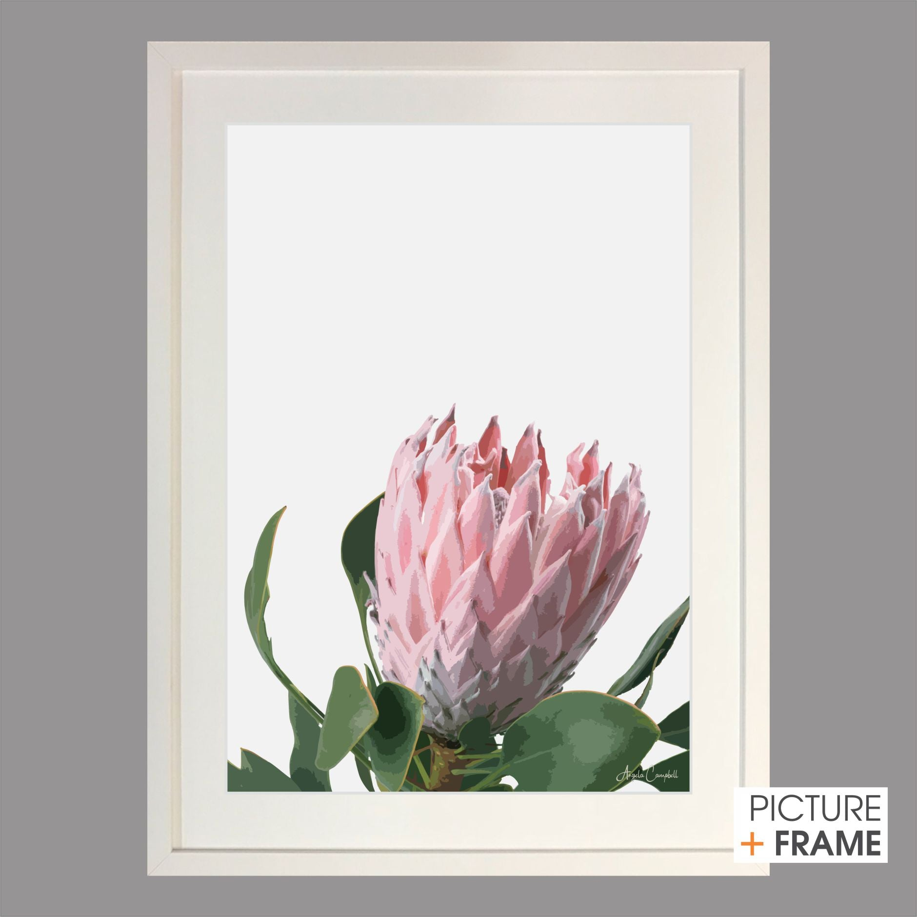 Subtle Protea - Picture Framer Perth