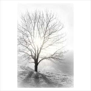 Tree Light - Photographic Poster print - Picture Framer Perth