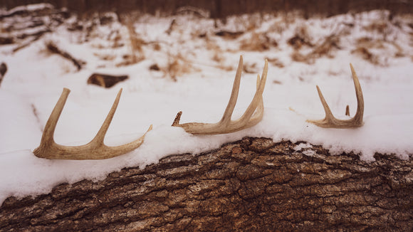 How to Find More Shed Antlers on the Properties You Hunt