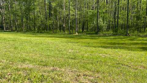 Have you maximized the potential of the food plots you hunt?