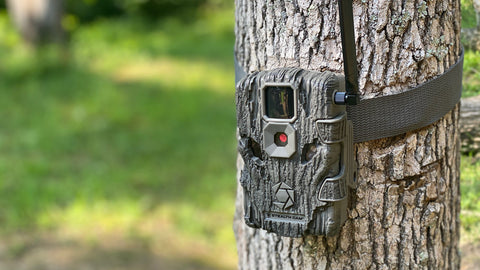 Don't forget to your trail cameras and change batteries.