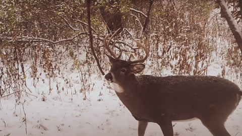 Boost deer activity on the properties you hunt with the addition of a mock scrape with a hanging vine.