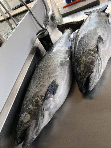 king salmon from Ludington