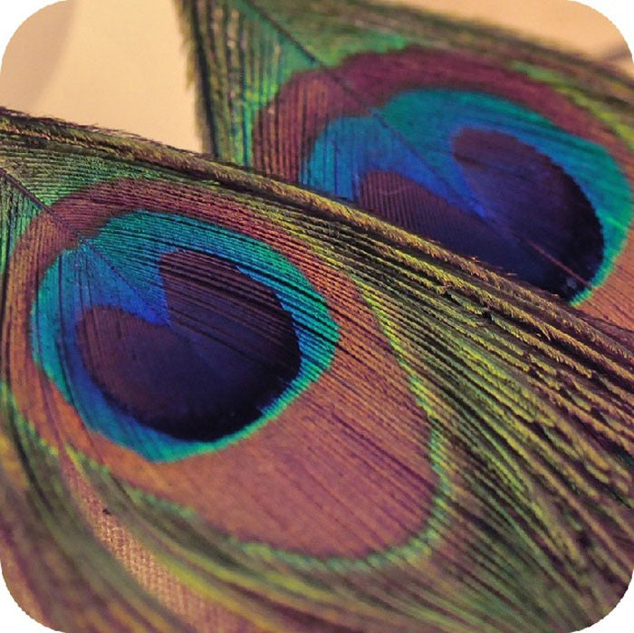 Charming feather earrings