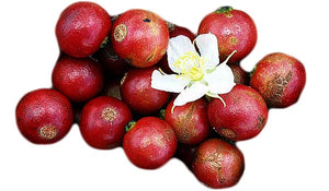 Strawberry Tree Fruit (Gasgase Fruit)