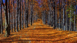 Autumn Woodland Track -  unique single-piece wallpaper from Pattern and Picture