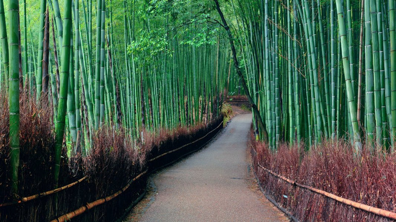 Into The Bamboo -  unique single-piece wallpaper from Pattern and Picture