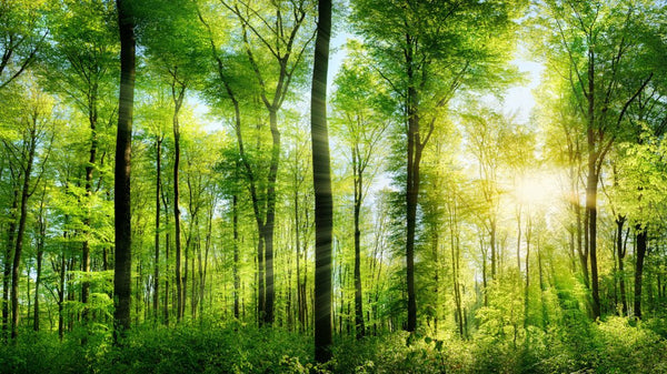 Woodland Sunshine -  unique single-piece wallpaper from Pattern and Picture