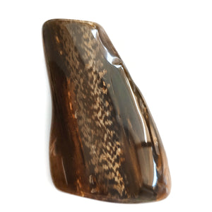 Petrified Wood Polished Freeform #1122
