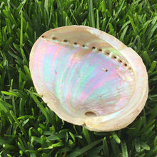 Load image into Gallery viewer, XL White Abalone Paua Shell Smudging Bowl
