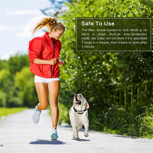 Dog training - no bark dog collar - Great Dog Shop