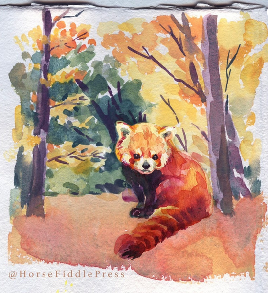 Red Panda in the Woods