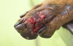 Preventing Alabama Rot
