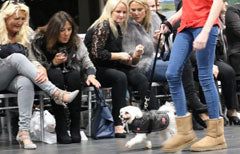 Ginger Ted on the cat(dog)walk at the I Love Variety Fashion Show 2017