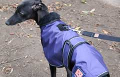 harness dog coat by ginger ted