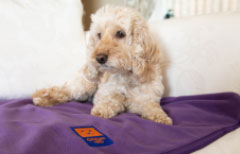 #StayHome with a Ginger Ted Cosy Fleece pet blanket