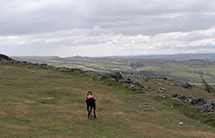 Exploring dog friendly Yorkshire at the top of Malham Cove