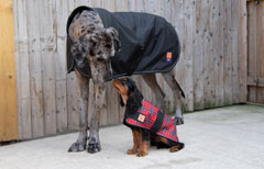 Big dog coats from Ginger Ted for larger dog breeds