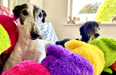 Marmite and Murphy find their forever home