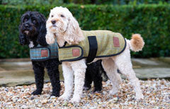 Tweed Dog Coats by Ginger Ted