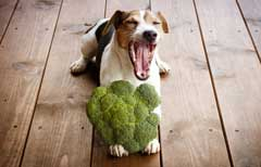 can dogs eat a vegan diet