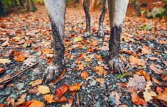 What can be done to prevent Alabama Rot