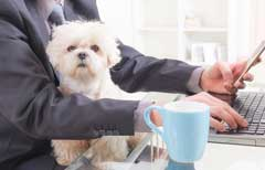 Will pawternity leave catch on in the UK