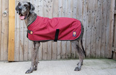 Extra large dog coats for great danes and large dog breeds by Ginger Ted
