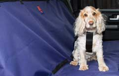 secure your dog with a seat belt when travelling in the car