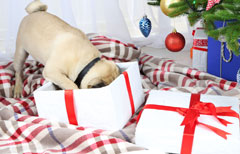 Chritsmas gift for dogs