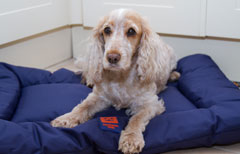 dog friendly travel bed ginger ted