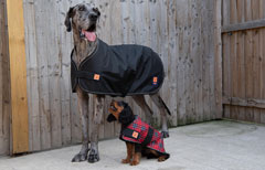 Large dog coats for Great Danes and larger dog breeds by Ginger Ted