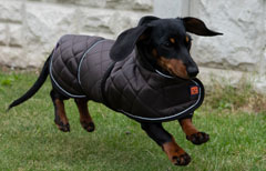 Thermal Quilted Harness Dachshund Dog Coat by Ginger Ted