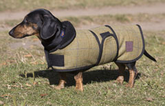 Tweed Dachshund Coats by Ginger Ted suitable for short legged breeds