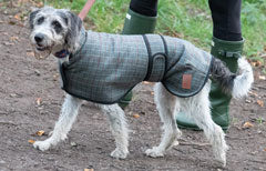 Tweed Greyhound Coats by Ginger Ted suitable for whippets, greyhounds, lurchers, sight hounds