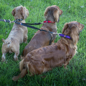 Ginger Ted Black 3-way triple fully adjustable high quality nylon coupler lead. Ideal for walking 3 dogs on a single lead